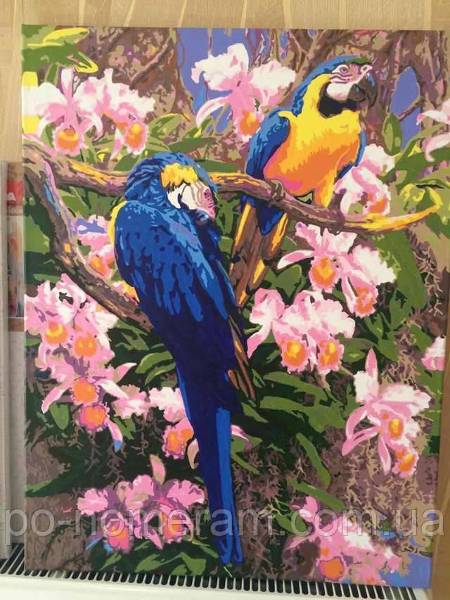 Картина по номерам Идейка Попугаи KH1055