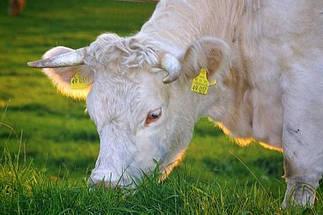 Для сельскохозяйственных животных