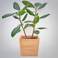 """Деревянный вазон для комнатных растений """"TRAPEZE"""", новая коллекция """"Stylish INTERIOR"""""""