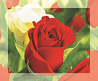 Картина на стекле с МДФ подложкой  Розы 50*60 см