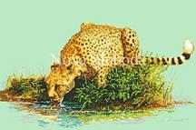 Рисунок на канве для вышивки нитками мулине ММ-3078 Леопард