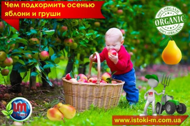 удобрение органическое_купить органическое удобрение_производство органических удобрений_купить биогумус_купить вермигрунт для рассады_купить вермигрунт универсальный_купить вермигумат_купить органическое удобрение оптом_удобрение органическое для овощных культур_удобрение органическое для плодовых кустарников_удобрение органическое для фруктовых деревьев_удобрение органическое для подкормки овощей_удобрение органическое для подкормки ягод_удобрение органическое для подкормки фруктовых деревьев_органическое земледелие_удобрение органическое для подкормки яблони_удобрение органическое для подкормки груши_удобрение органическое для подкормки сливы_удобрение органическое для подкормки абрикоса_удобрение органическое для подкормки персика_удобрение органическое для подкормки винограда