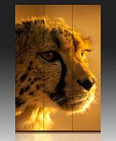 Ширма Быстрый гепард
