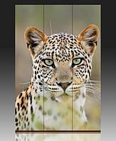 Ширма Леопард перед прыжком