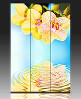 Ширма Нежность орхидеи
