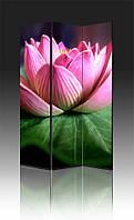 Ширма Розовая водяная лилия