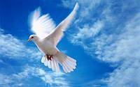 А Вы знаете что символизирует голубь и его изображение?