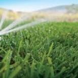 Искусственный полив газонов