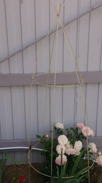 Декоративное ограждение куста розы