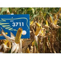 Семена Монсанто Кукуруза DK 3711 Экстра