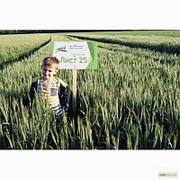 Семена озимой пшеницы Лист 25, 1р, Элита