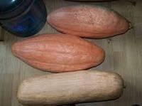 Насіння Гарбуз Рожевий Банан 5 шт, фото 1