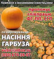 Сотрудничество выращивание  и посевной материал тыквы .