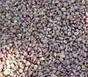 Чеснок - севок на посадку - посевной материал
