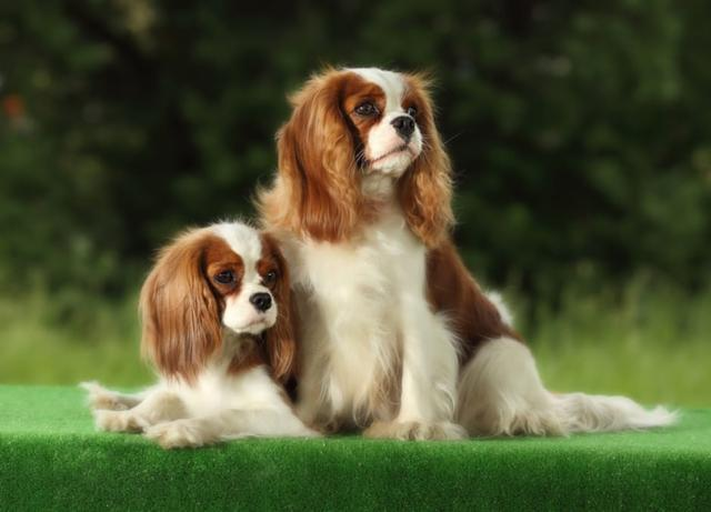 Pro Plan Adult Small and Mini Sensitive Digestion Корм для собак малых пород с чувствительным пищеварением