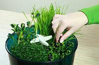 Проращиватель семян  (видео)
