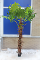 Искусственная пальма 230 см