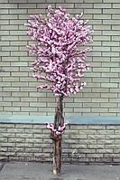 Дерево цветущей сакуры