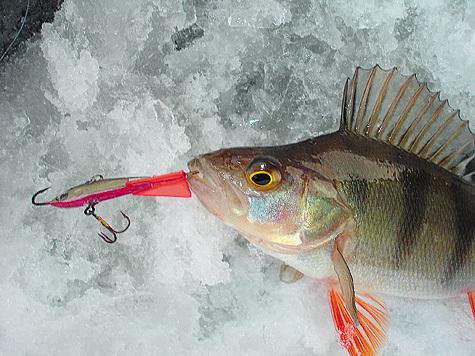 Зимняя рыбалка (леска, поплавки, сторожки,балансиры, удочки...)
