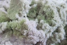 Технология промышленной переработки пуха и пера