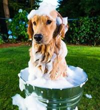 Шампуні, спреї, догляд за зубами, вухами та лапами для собак і кішок