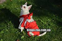 Костюм для собаки «демисезонн» мини 21*27 см, фото 1