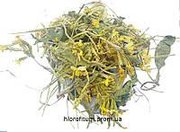 Трава Первоцвета лекарственного (Primula Officinalis), 50 грамм.