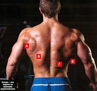 Мощная и широкая спина