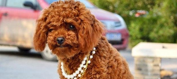 Ошейник-ожерелье светящийся для кошек и собак , разные размеры