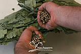 Професійний віник для лазні дубовий, фото 2