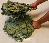 Професійний віник для лазні дубовий, фото 3