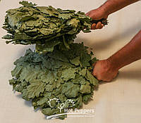 Веники банные дубовые оптом, фото 1