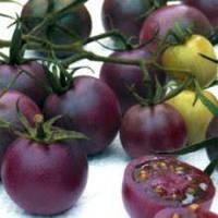 Все, что вы не знали о фиолетовых помидорах.