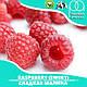 Ароматизатор TPA Raspberry (Sweet) Flavor (Сладкая малина) 5 мл, фото 2