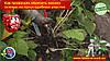 Как правильно обрезать малину осенью на приусадебном участке