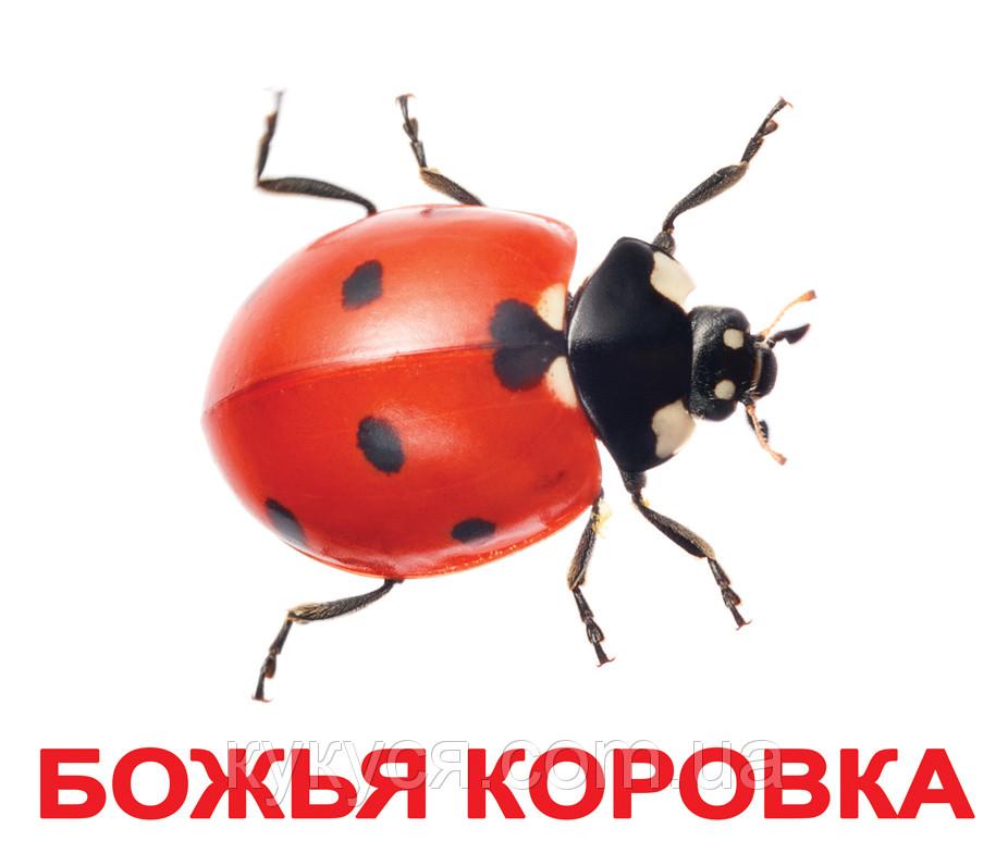 """""""Насекомые"""""""