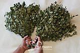 Березовый Веник  для бани и сауны , фото 3