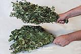 Березовые Веники  для бани и сауны опт, фото 4