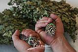 Березовый Веник  для бани и сауны , фото 5