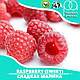 Ароматизатор TPA Raspberry (Sweet) Flavor (Сладкая малина) 10 мл, фото 2