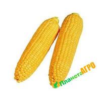 Семена кукурузы Леженд F1, 1 кг, Clause (Клоз), Франция
