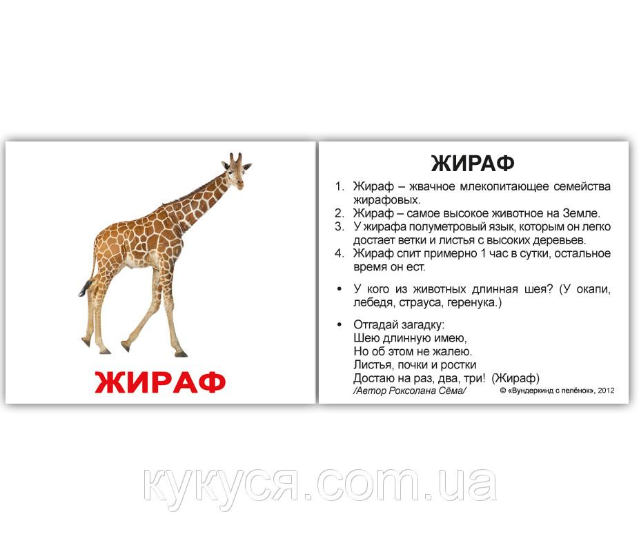 «Дикие животные с фактами» на белом фоне МИНИ 40