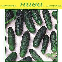 Маша F1 семена огурца партенокарпического Seminis 100 семян