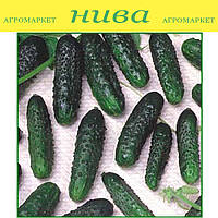 Маша F1 семена огурца партенокарпического Seminis 250 семян