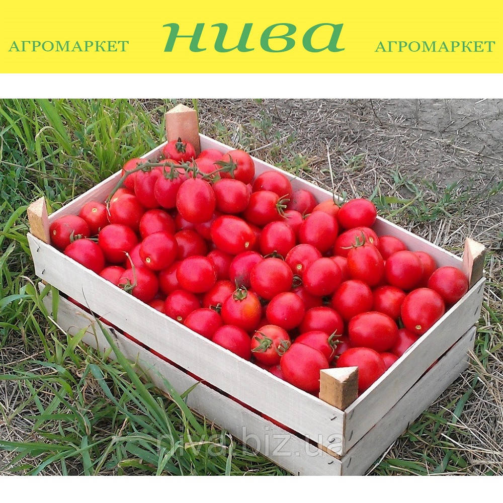 Солероссо F1 семена томата дет. Nunhems 100 семян