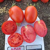 Семена томата детерминантного Дино F1 Clause от 1 000 шт