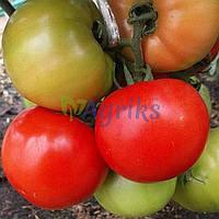 Семена томата детерминантного Флорида 47 F1 Seminis 1 000 шт