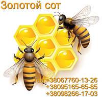 Мед в сотах (акация)