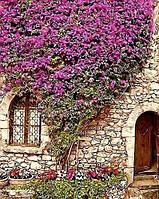 Картина по номерам Коттедж в Провансе 40х50см  Без коробки