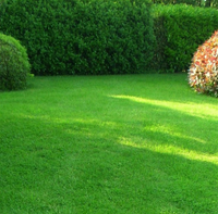 Засухоустойчивый газон для засушливых территорий Paradise garden 20 кг